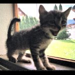 Pow Wow - Moi vouloir être chat